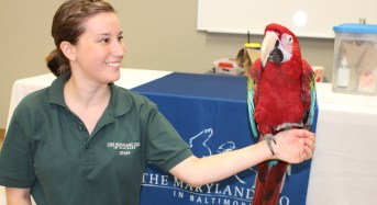 'Libraries Rock!' With Animals During Summer Reading