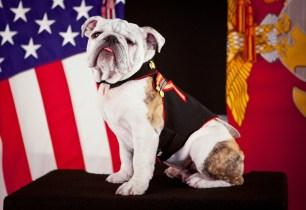 Semper Fi, We're Here For All Veterans