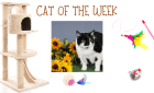 Cat of the Week – MISTER