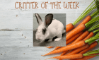 Critter of the Week – KING