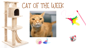 Cat of the Week – HITCHCOCK