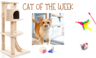 Cat of the Week – ROBBY