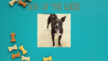 Dog of the Week – LENNY