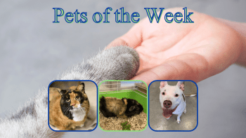 Pets of the Week for January 12, 2021