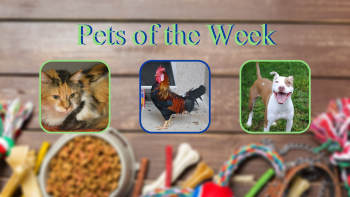 Pets of the Week for March 2, 2021