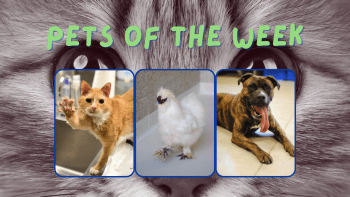 Pets of the Week for June 14, 2021