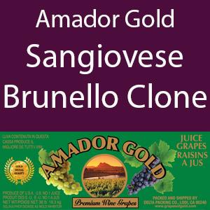 Amador Gold SanGiovese / Brunello Clone