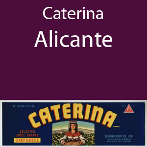 Catarina Alicante Clement Hills AVA Base of Sierra Foothills