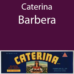 Caterina Barbera Clement Hills AVA Base of Sierra Foothils