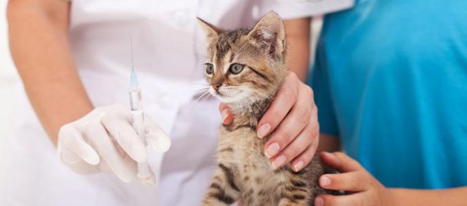 Update Kisaran Biaya Vaksin Kucing Daftar Harga Tarif