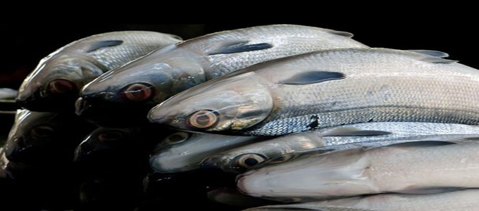Update Harga Ikan Bandeng Per Kg Di Pasaran Daftar Harga Tarif