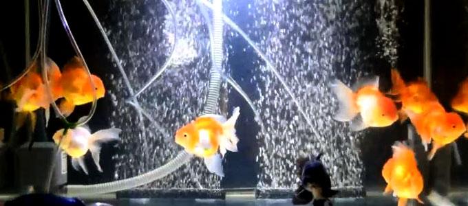 Update Daftar Harga Tabung Oksigen Untuk Ikan Daftar Harga Tarif