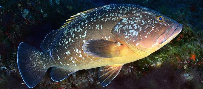 Info Harga Ikan Kerapu Dalam Berbagai Jenis Daftar Harga Tarif