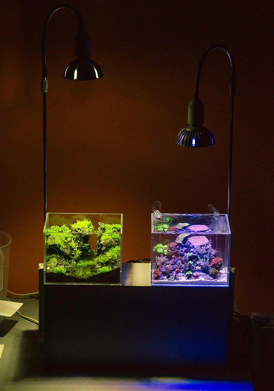 Akuarium Kecil Untuk Di Kamar,harga akuarium kecil untuk di kamar,aquarium kecil di kamar,akuarium kecil untuk di kamar,aquarium mini di kamar tidur,aquarium untuk di kamar