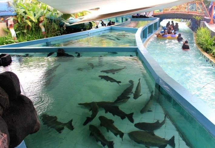 promo tiket jungle waterpark