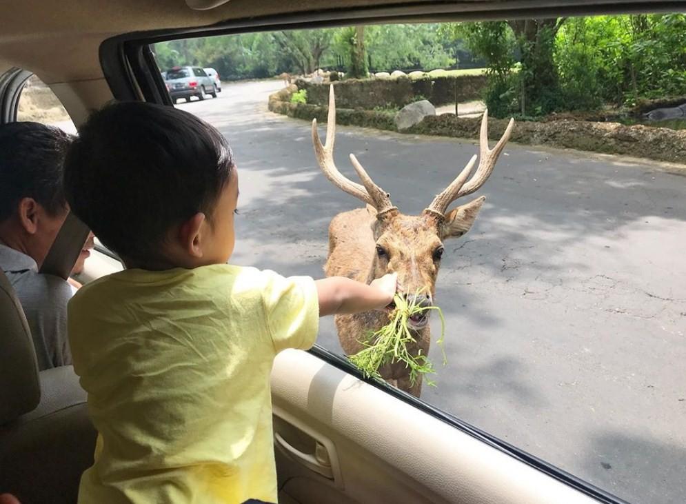 safari siang