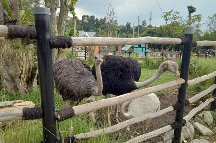 tiket masuk lembang park zoo