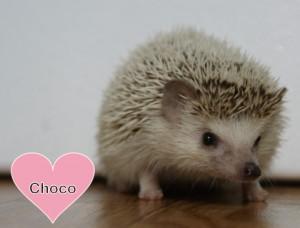 チョコの写真