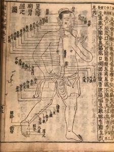 十四経発揮和語鈔の足陽明胃経