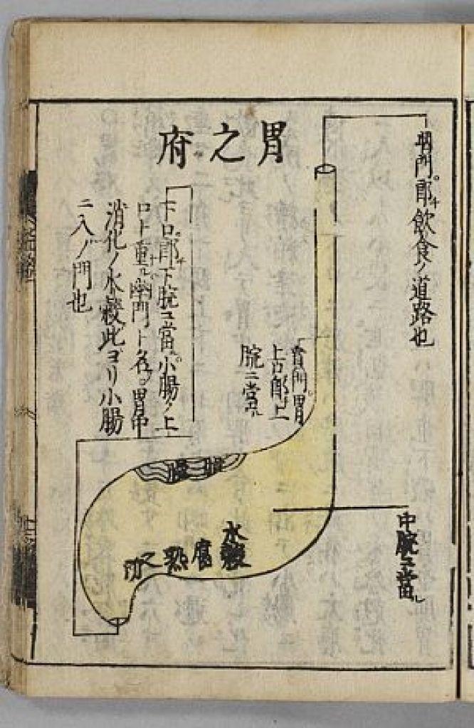 臓腑経絡詳解の胃腑の絵図