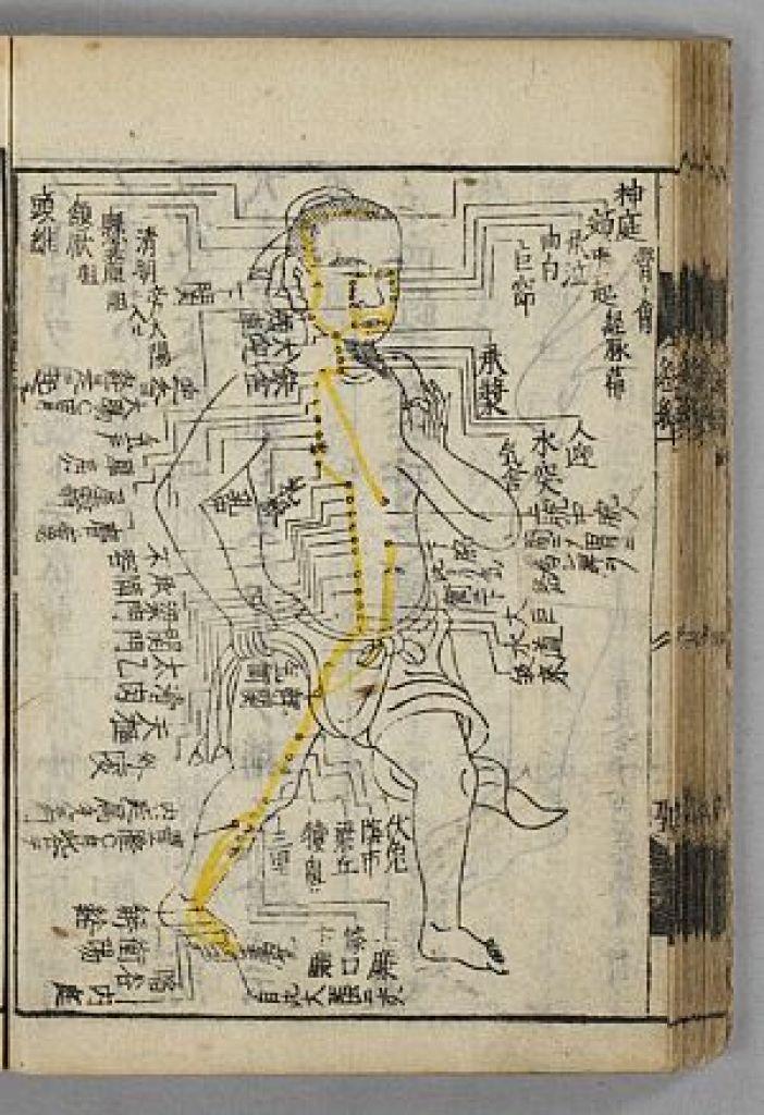 臓腑経絡詳解の陽明胃経の絵図