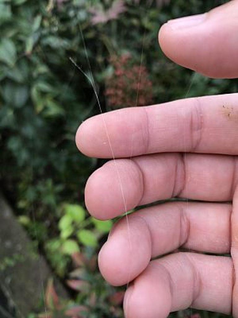 クモの糸と脈診、細脈は蜘蛛の絲に似る