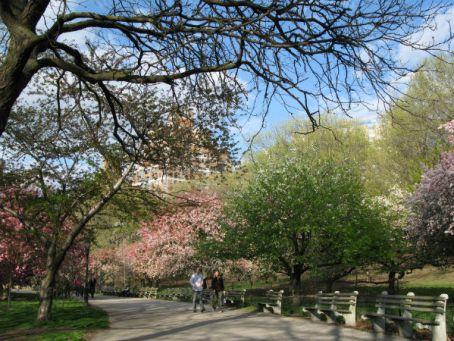 Riverside Park in harlem