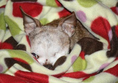 Harley Sleeping (4)