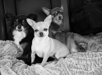 Harley with his siblings (11)