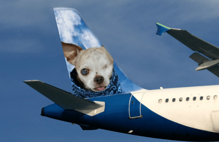 Harley on tail of airplane