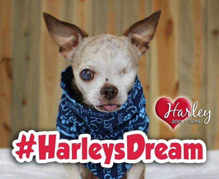 HarleysDream hashtag