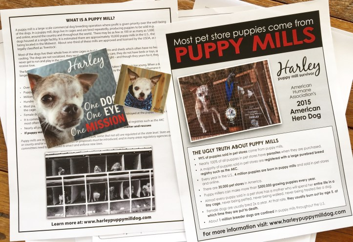 Puppy Mill awareness flyers