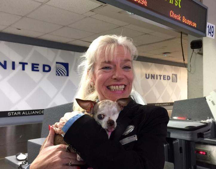 The United Airlines agent recognized Harley as we walked up to check in for our flight in Washington DC.