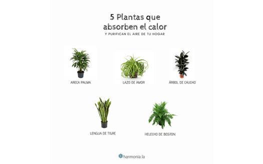 plantas para el calor