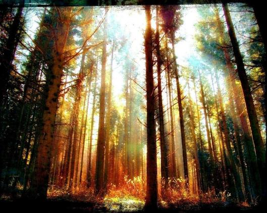 sunlight-woods-forest