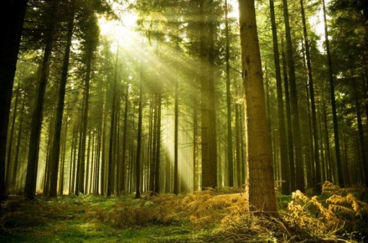 forest_27