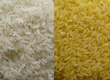 si-GoldenRice