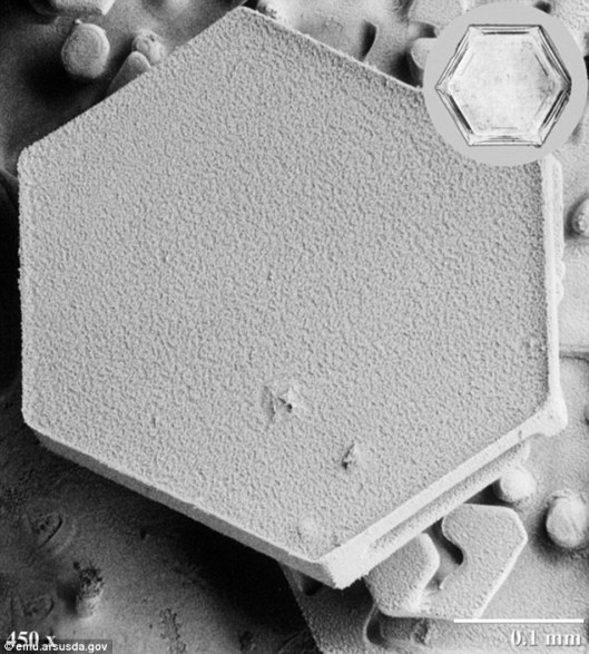 Snowflakes-under-a-Microscope-03