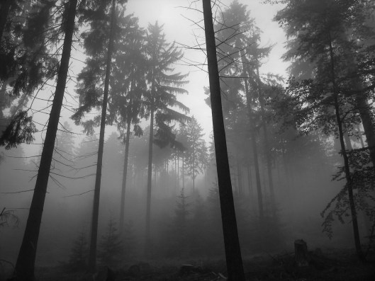 forest_9