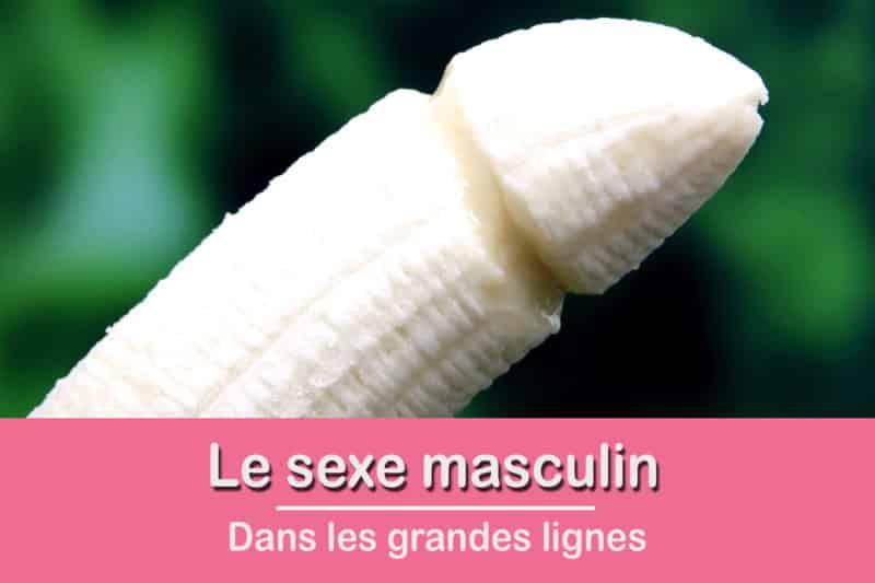 Sexe masculin – les grandes lignes