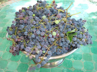 grapes - cluster