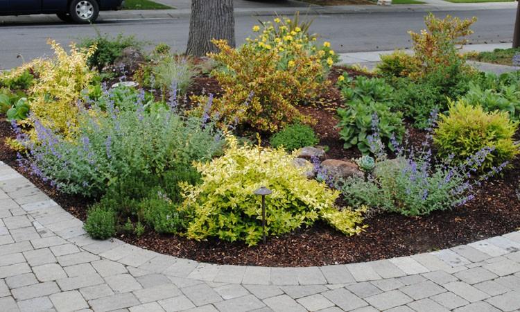 Low Water High Color Garden | Harmony in the Garden on No Grass Garden Ideas  id=48404