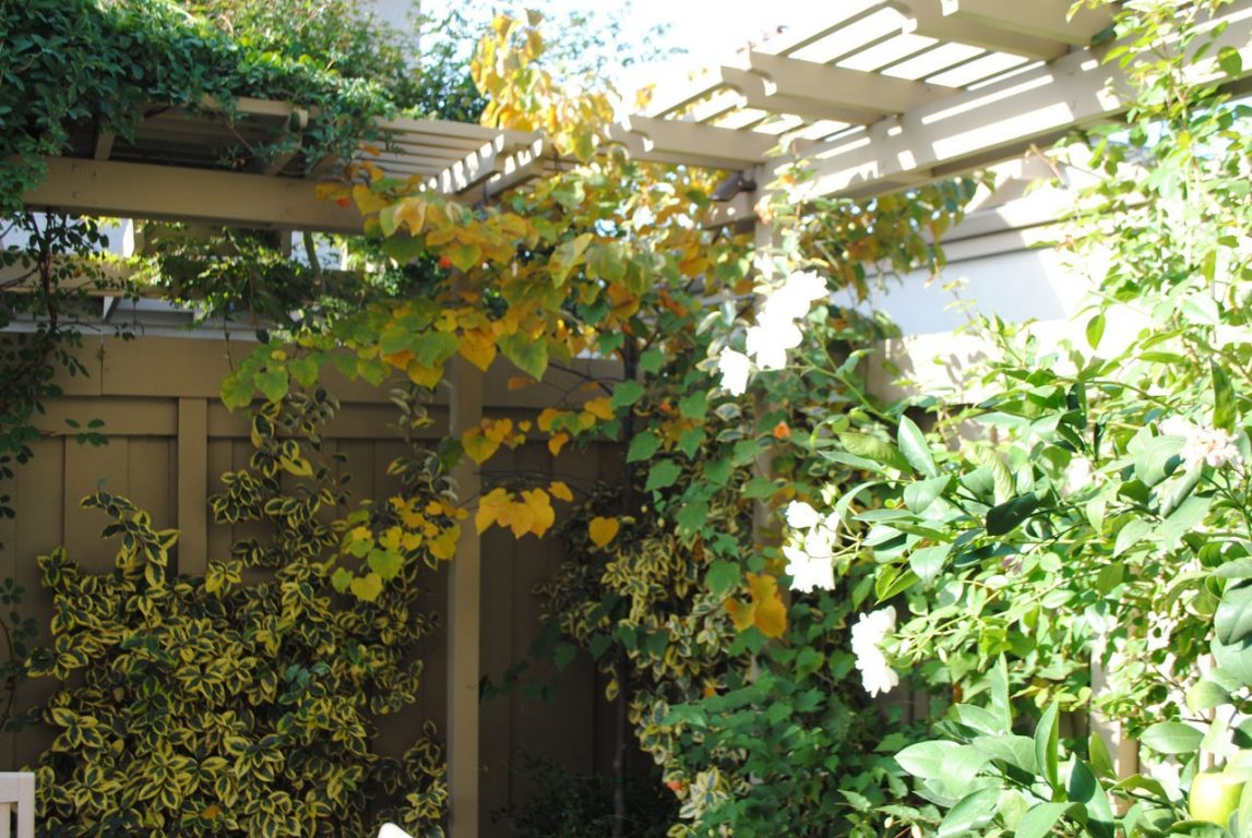 Jewelbox Courtyard05