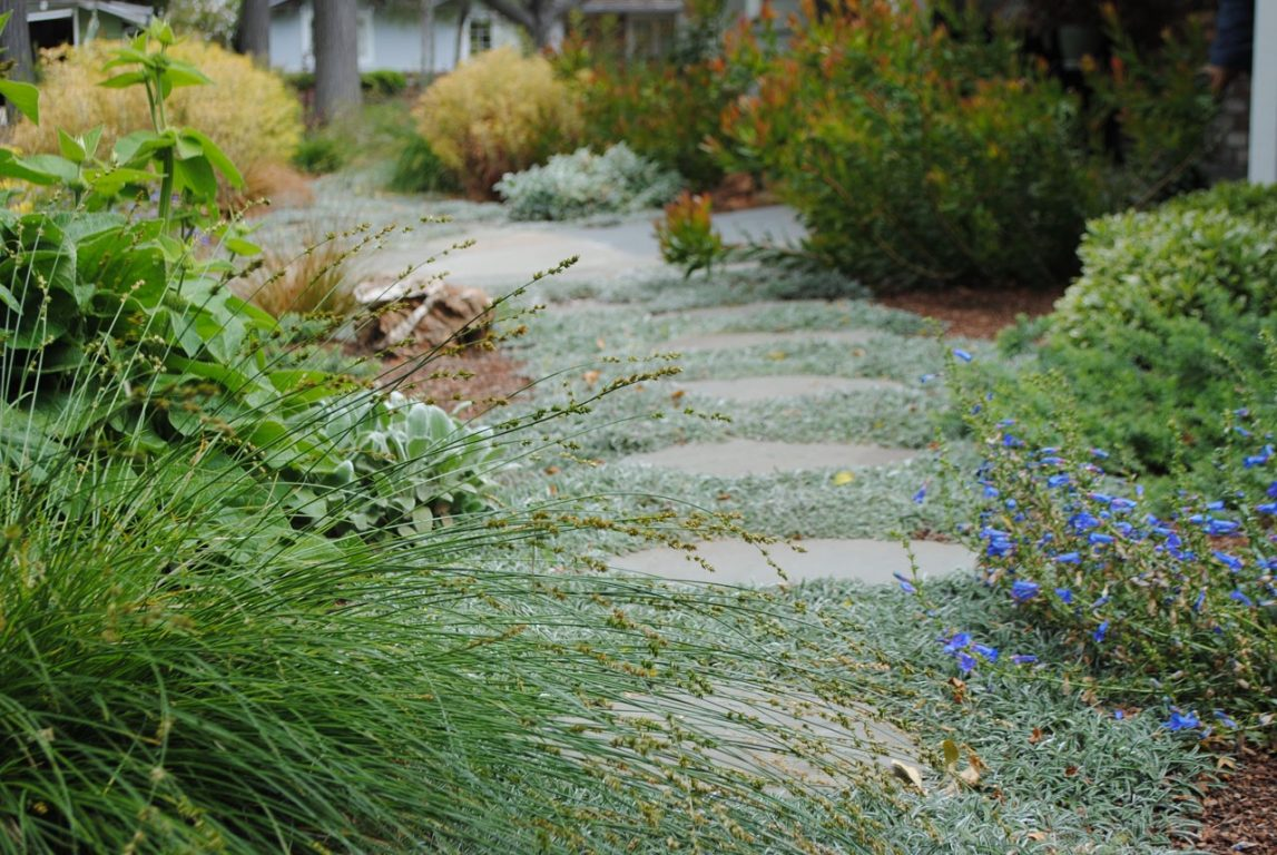 Lawn Free and Low Maintenance04