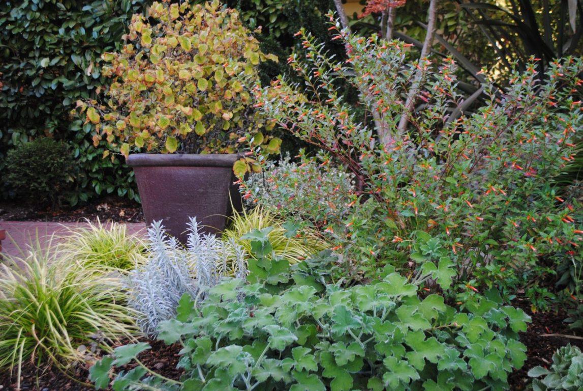 Rebecca's Garden Pics15