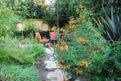 Mediterranean Garden Makeover-Northern California-Drought Tolerant Garden Design-Lawn Removal Ideas-lion's tail