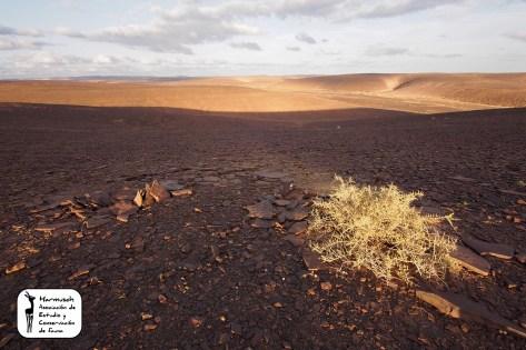 Sahara 2013-6