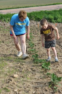 The potato bugs are back even with the change in the garden location. To say our hearts sank and we were disappointed is an understatement. Here Sam and my mom are inspecting the plants to remove the bugs.