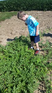 Inspecting the drip irrigation line to make sure the plants were receiving water.