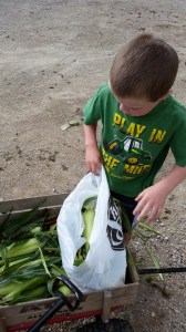Math is used frequently in the CSA. Including reinforcing adding and multiplication when bagging sweet corn.